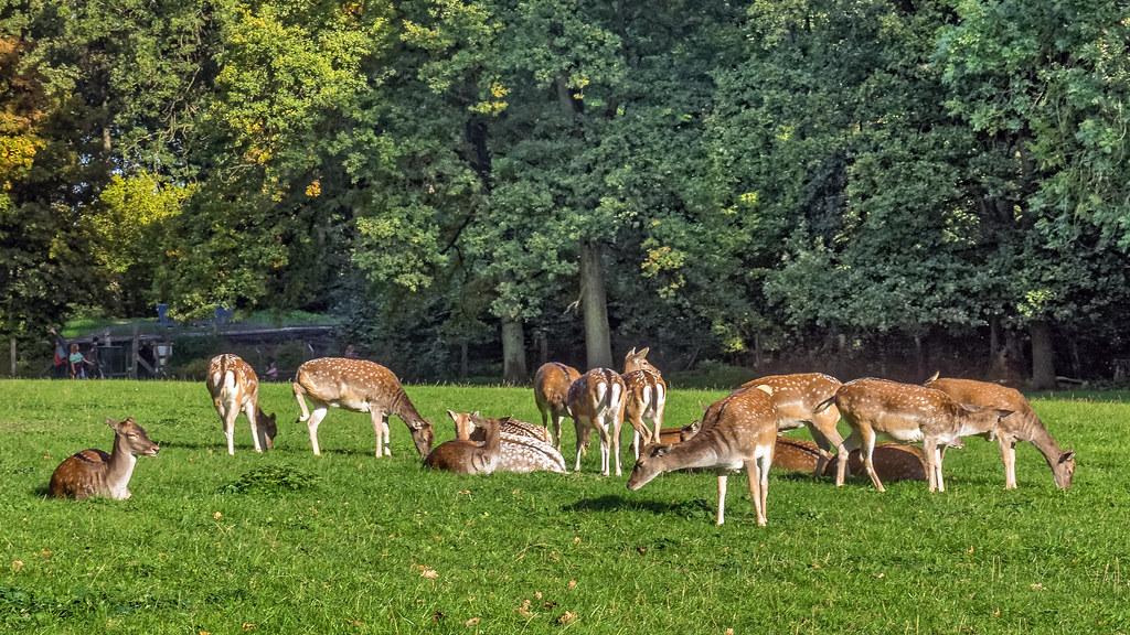 Fotografía de ciervos descansando en plena naturaleza
